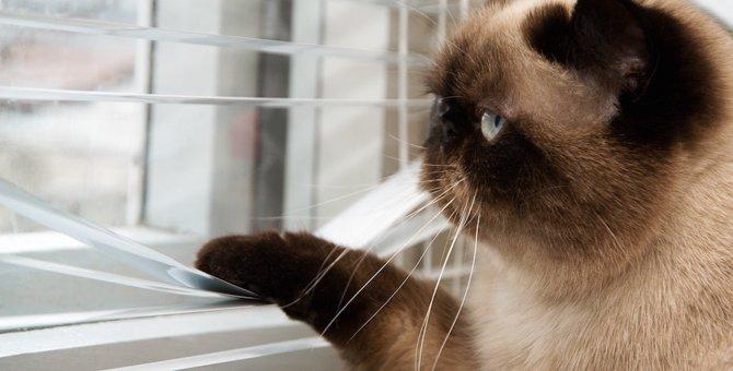 猫のいるお部屋でブラインドを使う時注意したい事