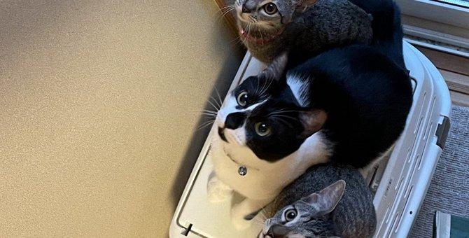 『探究心旺盛な猫』がしがちなこと5つ