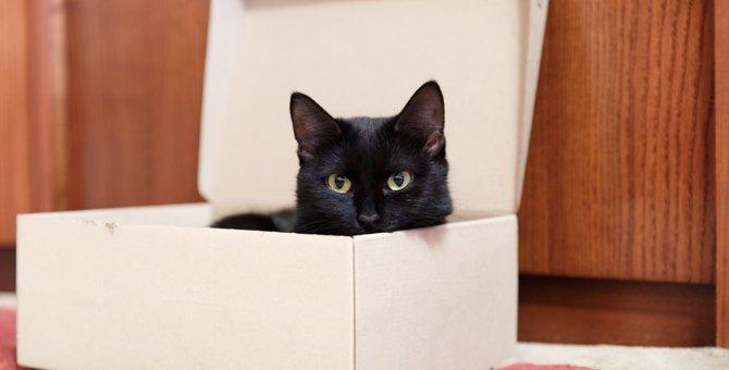 リアル猫の宅急便!ヤマトのダンボールを使った猫のお家がかわいい