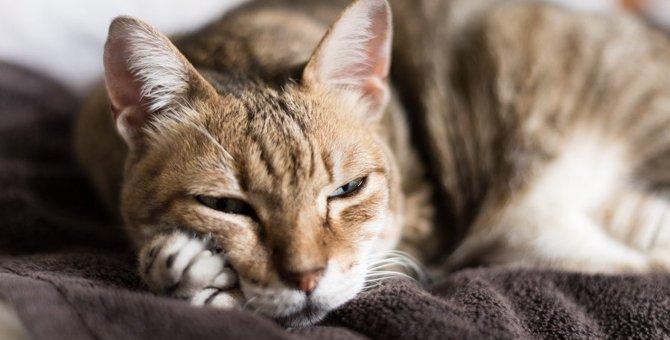 猫の『認知症』を疑うべき5つの初期症状。悪化するとどうなるの?