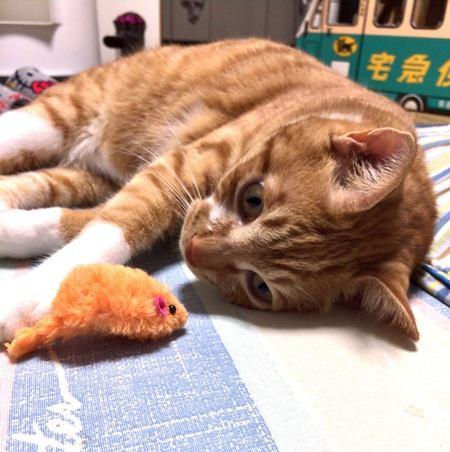 危険な物もある?猫用おもちゃのNGな選び方5つ