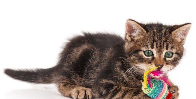 子猫にとっておもちゃの役割とは?
