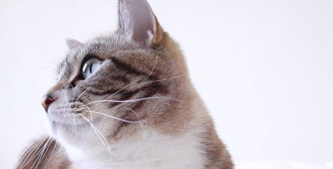 猫は自分や家族の『名前』を聞き分けられる?