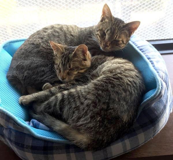 2匹はいつも一緒♡全盲の子猫と片目がない子猫の出会い!