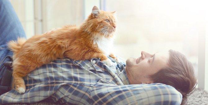 猫が家族を信頼している時のサイン3つ