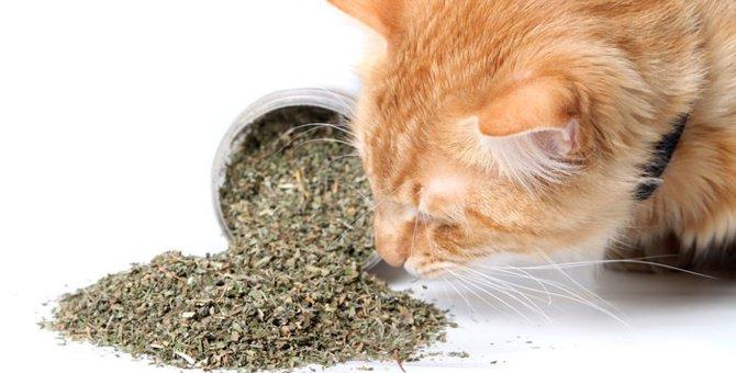 キャットニップを猫に与える時の方法やおすすめおもちゃまで