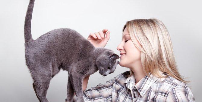 猫はここを撫でると喜ぶ!触り方のコツ