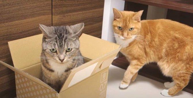 納得出来なかった猫ちゃんのパンチ抗議