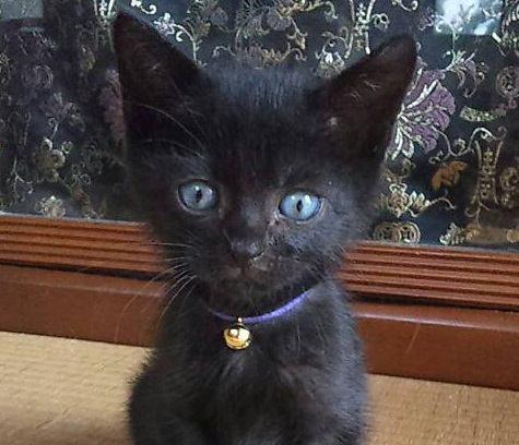 保健所にある処分機から救出された黒猫「ニキ」が教えてくれたこと