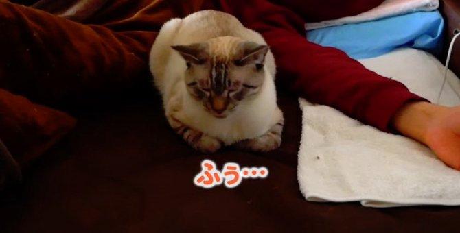 新しい動画の楽しみ方♪選んだ選択肢によって猫ちゃんの行動が変わる!