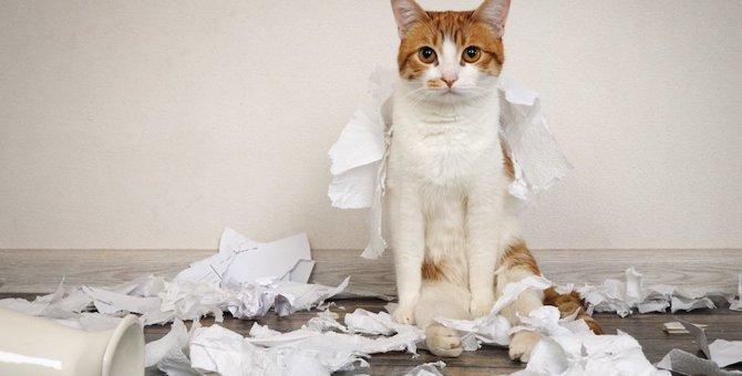 猫に「ダメ」を教える6つの方法