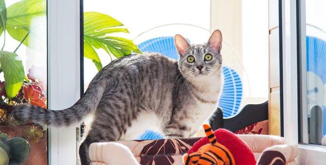 猫の暑さ対策、扇風機だけじゃダメ!使う時の注意点とは?