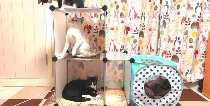 室内猫におすすめ!100均グッズで簡単に作れるDIYキャットタワー!