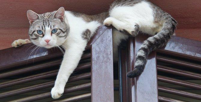 猫が落下した後に注意すべき症状5つ