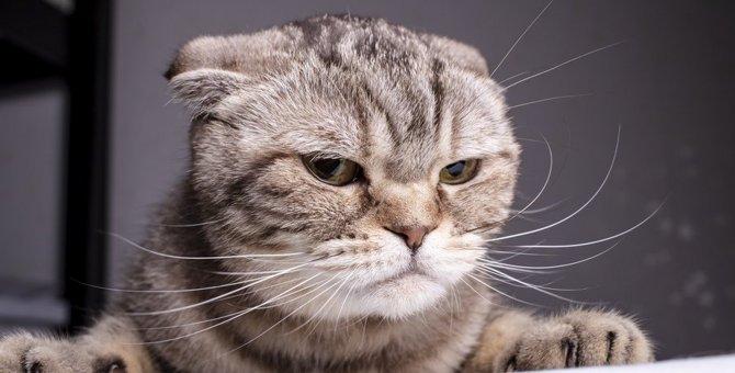 猫も貧乏ゆすりってするの?