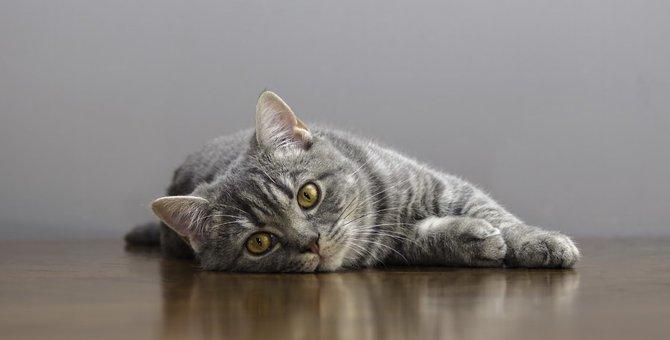 猫のリンパ腫について~症状や治療法