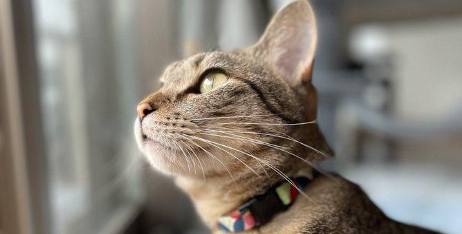 猫が『ソワソワして落ち着かない』ときの原因3つ