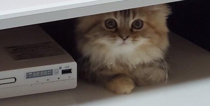 猫好きの人は知っておくべき!猫に興味をもってもらう方法5つ
