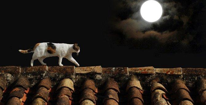 猫と月には深い関係が?満月、新月で行動が違う事も