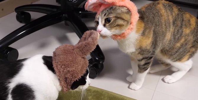 可愛さ半端ない!うさちゃんの被り物でご機嫌な猫たち♡