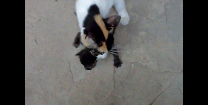 母猫ちゃん、我が子を忘れて動揺が隠せず!