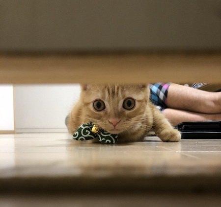 猫が物陰から飼い主を見つめる心理8つ