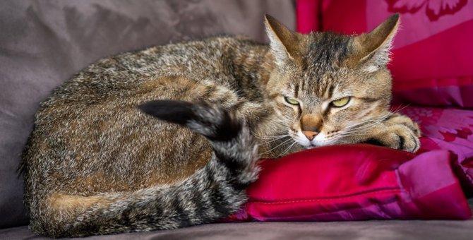 猫が「安心出来ないニャ」と感じる環境3つ
