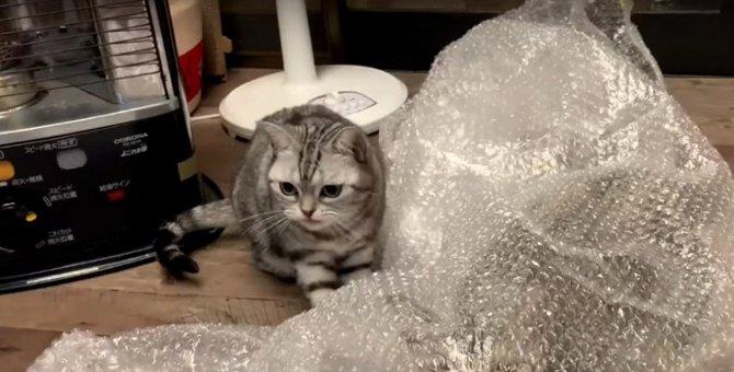 猫ちゃんのぷちぷちドッキリ!が可愛すぎる♡