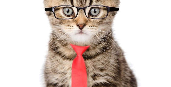 猫好きの方にオススメのネクタイ5選!