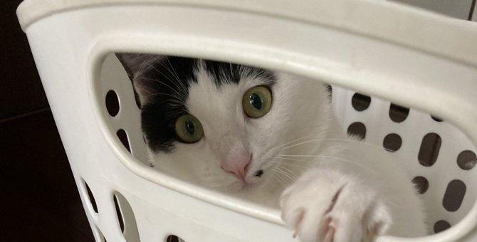 猫にとって最適な家とは?『住まい選び』で押さえたい重要項目5つ