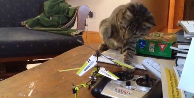 ラジコンをちょいちょい!とする猫ちゃん…しかし、その好奇心が悲劇を呼びます