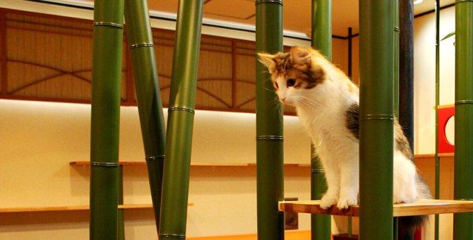最新の猫カフェ情報!奈良にあるおすすめのお店をご紹介
