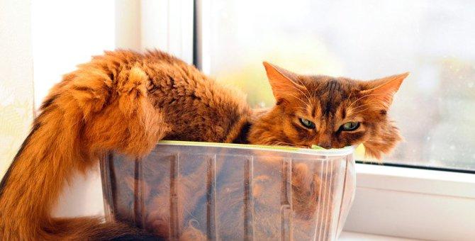 猫のたぬきしっぽって何?