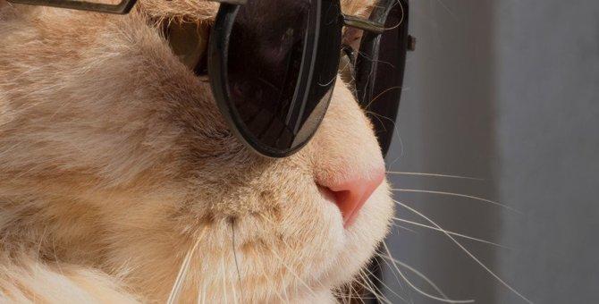 猫にかっこいい名前をつけてあげたい!おすすめの名づけ方