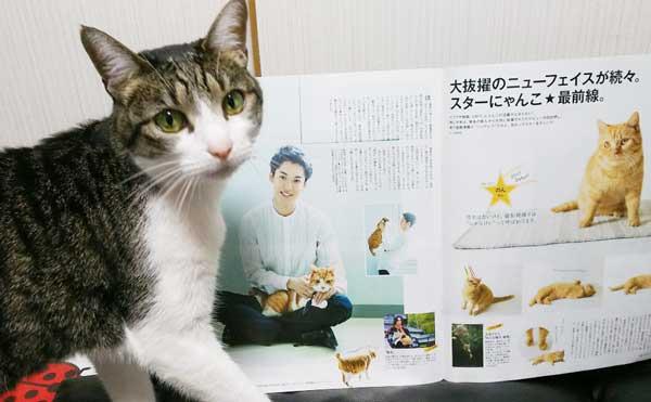 雑誌ananの猫特集「にゃんこLOVE」の内容