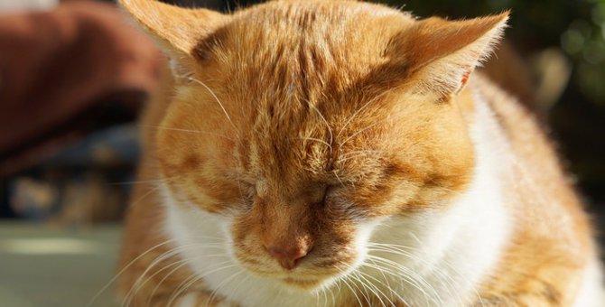 猫のごめん寝に隠された本当の理由