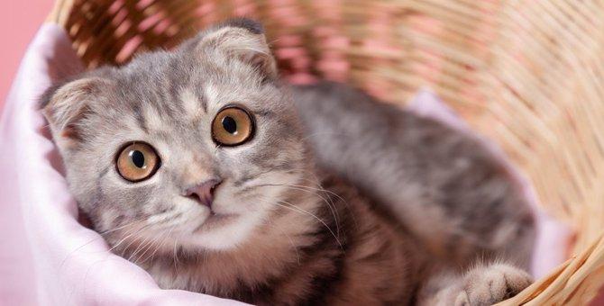 聞いたことありますか?猫のオナラ