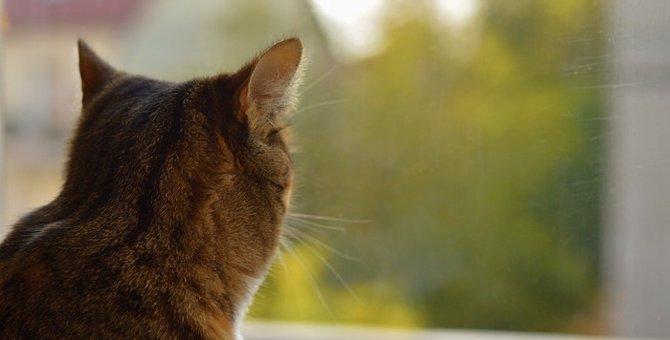 猫が拗ねる時にみせる5つのしぐさ