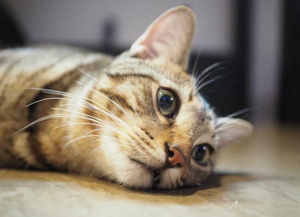猫が留守番中に退屈しないためにやるべき6つのこと
