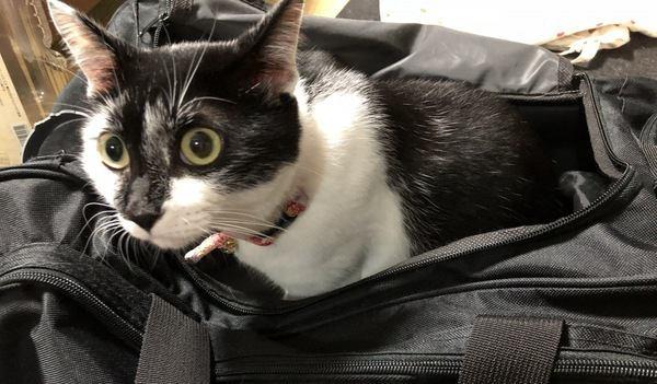 猫がキャリーケースに入るのを嫌がる時の対処法2つ