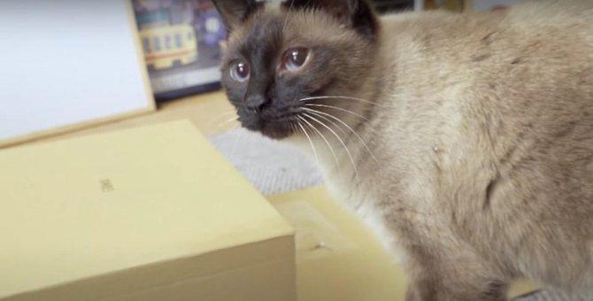 ピンクのふわふわを隠してみたら…♡猫ちゃんの熱い執念?
