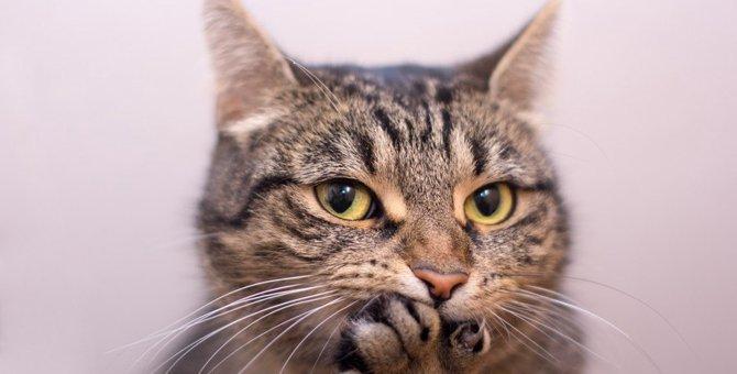 猫と人間の感情が似ていると思う7つの瞬間