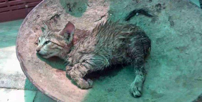 瀕死の子猫を救出…一刻を争う治療の行く末は?
