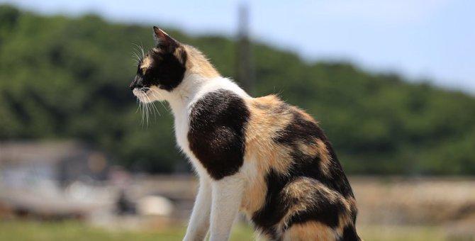 あなたの愛猫はどう?幸運を招く猫の6つの特徴