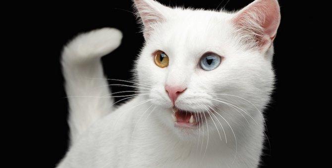 猫の鳴き声が低い時の気持ちと注意点とは