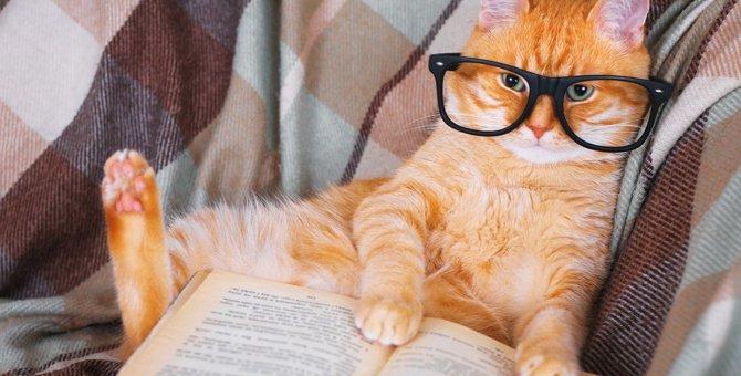 猫が記憶しやすい『人間の言葉』3選!覚えてもらうコツとは?