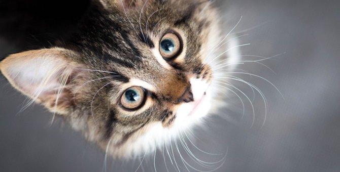 猫を飼いたい人に伝えたいこと。飼う前にしたい心の準備