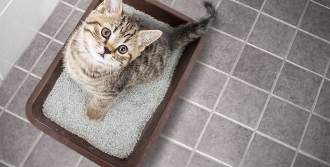 猫はストレスで下痢をする?考えられる原因5つと対処法