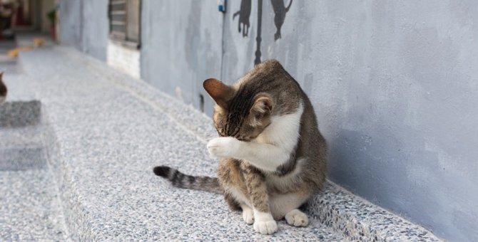 猫が顔を洗うタイミング!雨が降るのは本当なのか