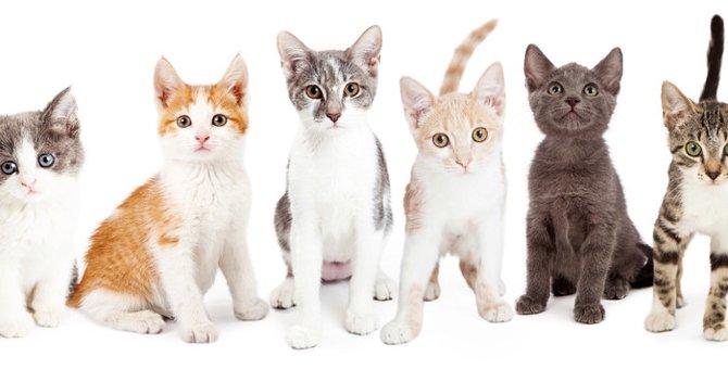 子猫の値段っていくら?人気猫種10種類の平均価格と個体